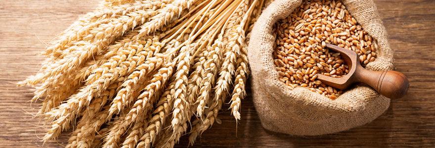 Vente de blé directement en ligne